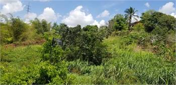 Steel of a deal, low priced land for Sale ,  in Macaulay, sixteen and ten acres respectively 4.5M up